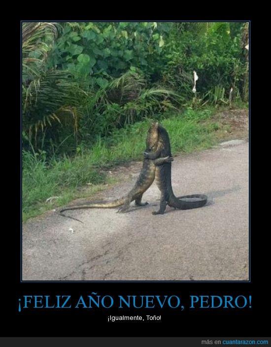 abrazo,Año Nuevo,Lagartos,Pedro,todo bien?,Toño