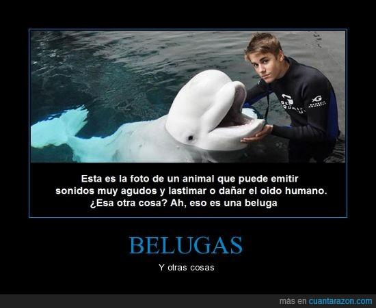 agudo,ballenas,belugas,dañar,justin bieber,oido,se retira *_____*,sonidos