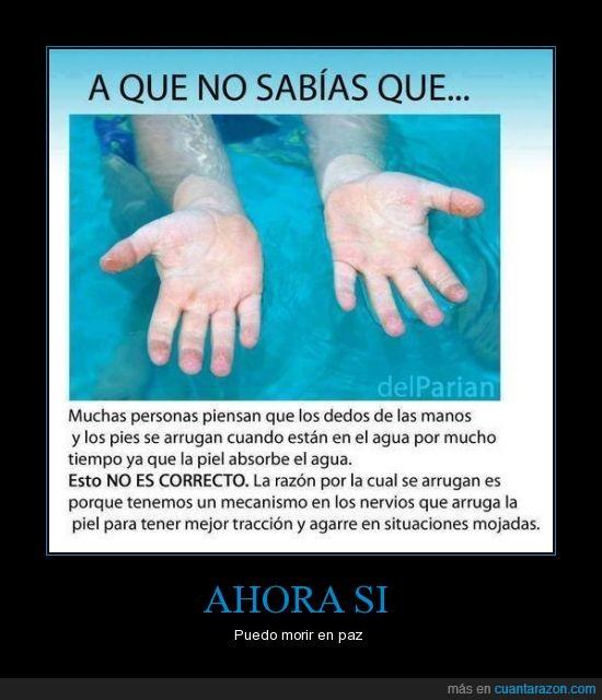 agarrar,agua,manos,mejor,mojada,piel humana,tracción