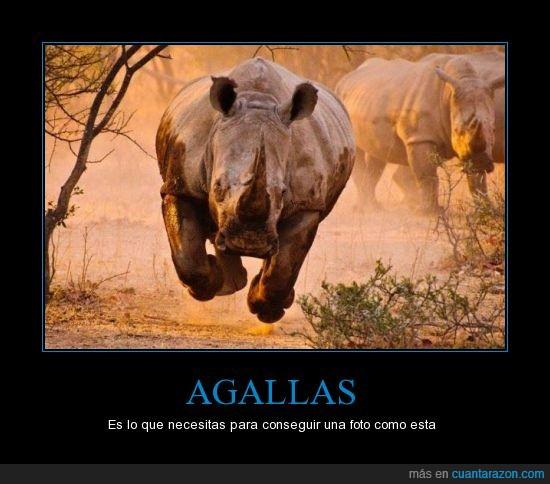 agallas,correr,estampida,foto,fotografo,pos vuelo xD,rinoceronte