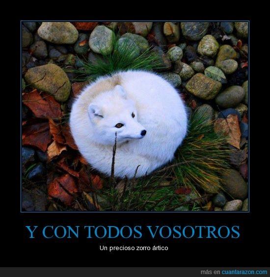 artico,AWWWW,blanco,blanquito,mono,zorro