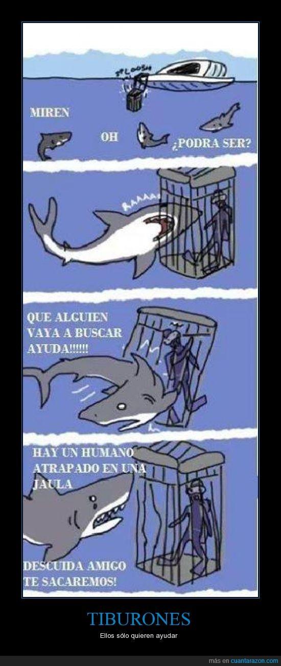 atrapado,ayudar,humanos,jaula,salvar,tiburones