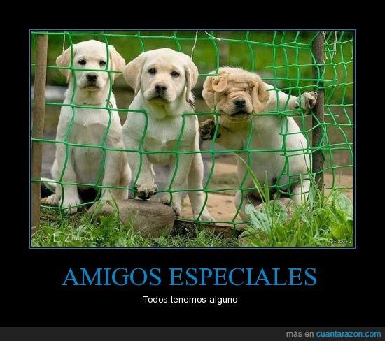 cachorro,cagafotos,cara,foto,jodefotos,labrador,meter,perritos,perro,red,sale mal,tierno