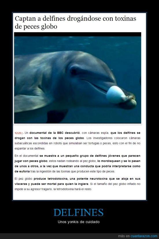 colocar,delfin,drogas,pez globo,toxina