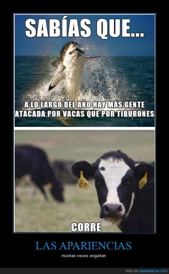 asesinas,ataque,corre mientras puedas,matar,tiburon,vaca