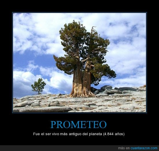 árbol,estupidez humana,fue TALADO,Nevada,Prometeo