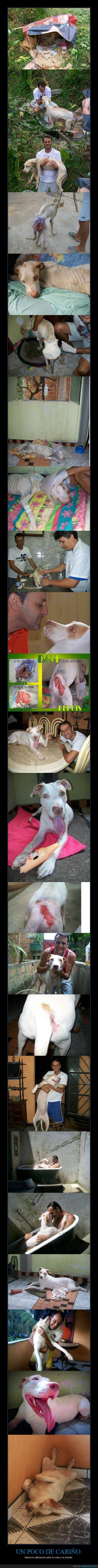 adoptar un animal,curar,herida,infección,perro,regalar vida,salvar