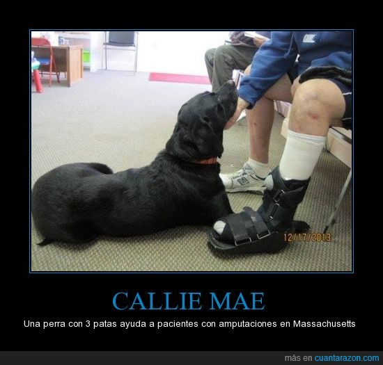 3 patas,Callie Mae,EE.UU.,Massachusetts,perra que ayudan mas que (probablemente) nosotros
