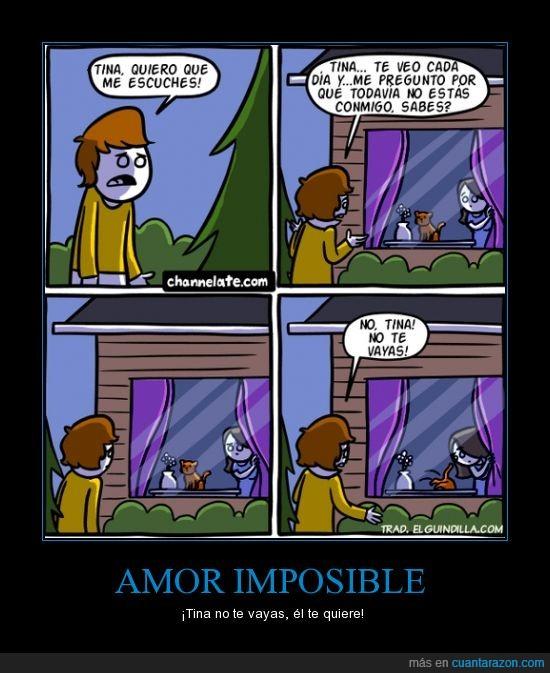 amor,flor,gata,hombre,humor absurdo,imposible