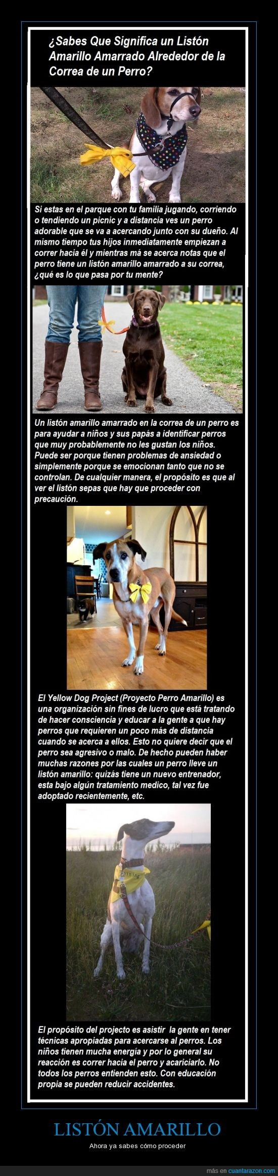 amarillo,cinta,informarse es prevenir accidentes,lazo,liston,pañuelo,proyecto