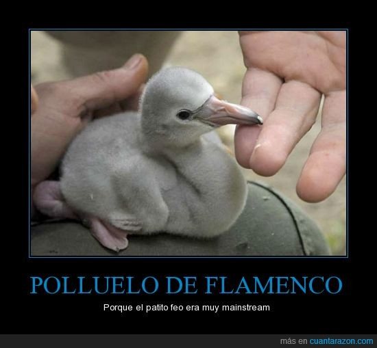 flamenco,mainstream,monada,no es feo,patito feo,polluelo
