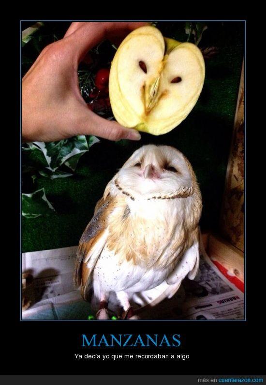 buho,cara,cortar,igual,lechuza,manzana