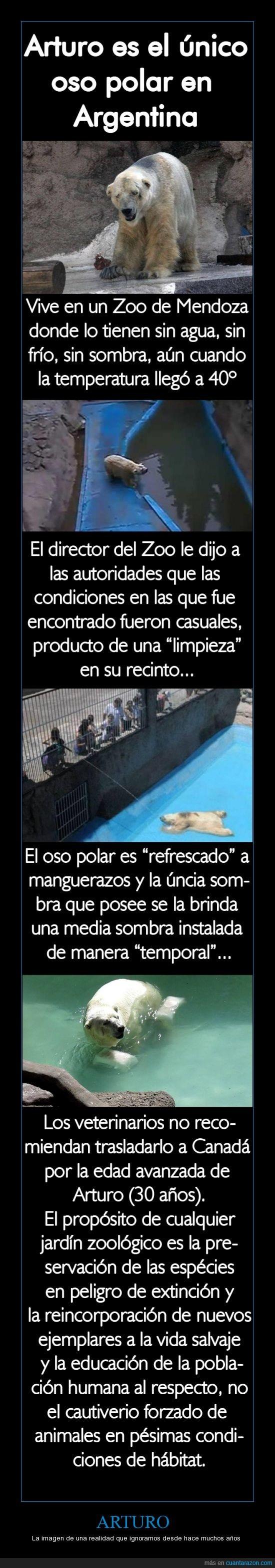 Argentina,Arturo,Condiciones Horribles,Controlemos más los zoológicos,Mendoza,No tiene Polo,Oso Polar,Zoológico