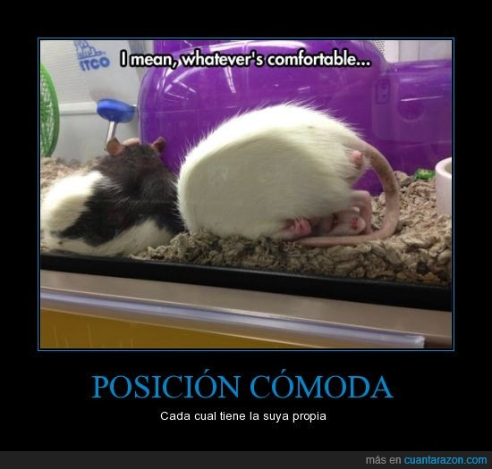 blanco,cómodo,dormir,hamster,jaula,Posición,rata,raton