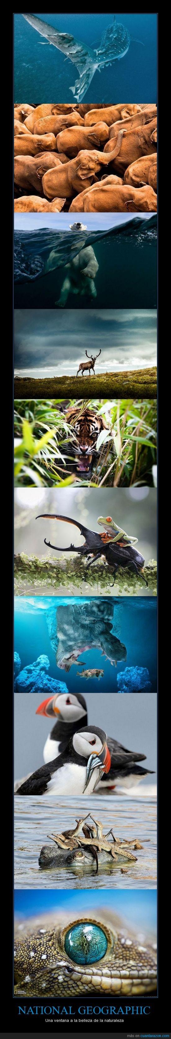 animal,arte,elegante,estamida,impresionante,lagarto,naturaleza