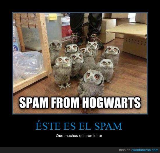 buho,harry potter,hogwarts,lechuza,no me ha llegado ni medio,spam