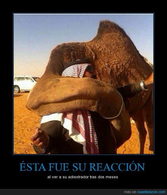 abrazo,dromedario,si piensas que es un camello revisa tu ignorancia,tierno