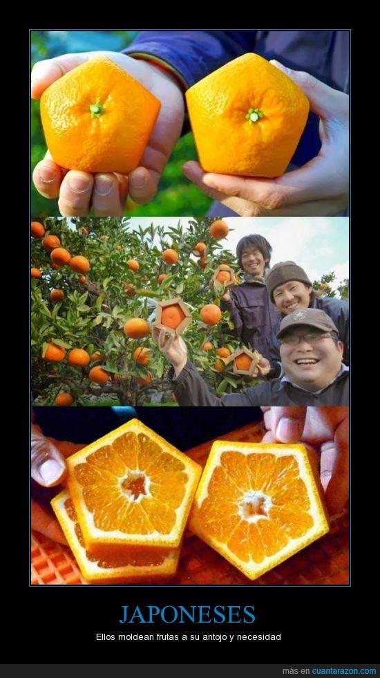 corazones y peras con forma de buda,fruta,hacen eso con sandias cuadradas,lo hacen que para que más frutas entren en orden en una caja,Naranja,pentagono,piramidales