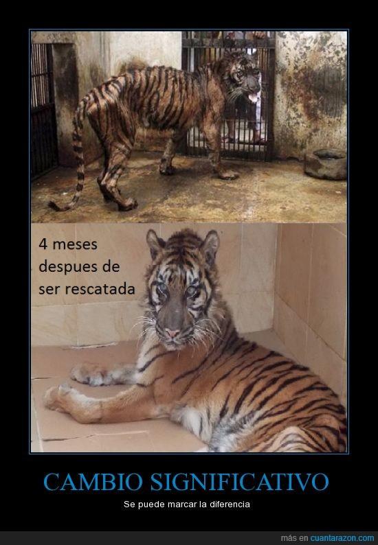 melani,rescatada,rescatar,sana,surabaya,tigre,zoo