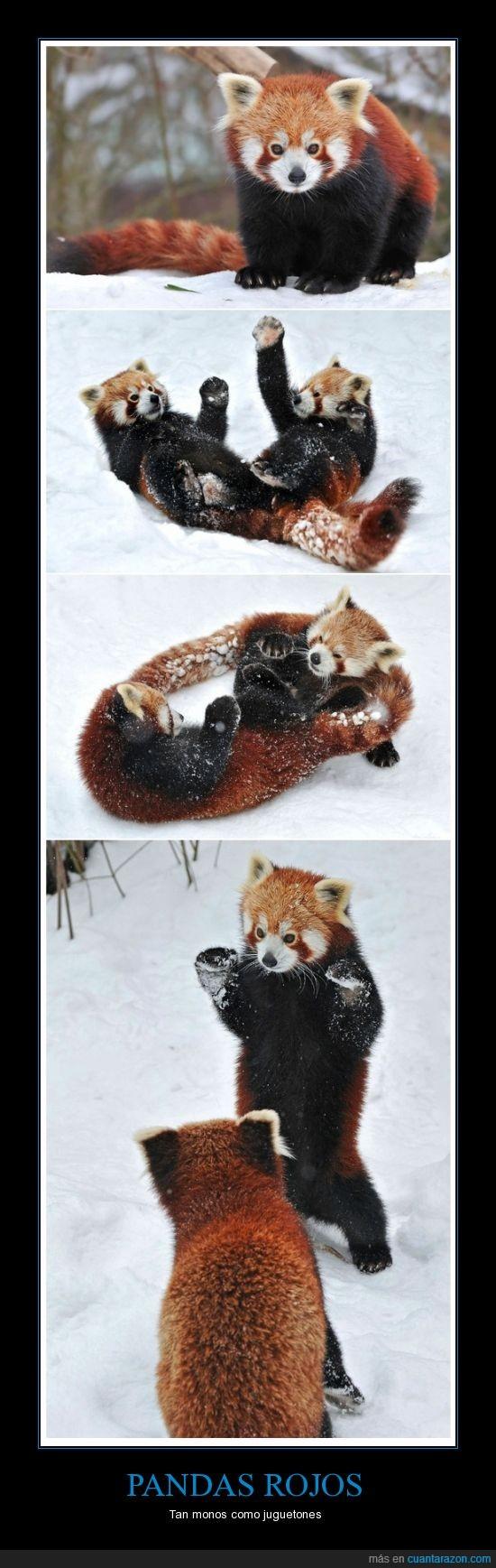 jugar,luchar,nieve,panda,pelea,rojo