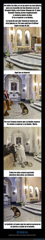 amor,esperar,iglesia,me gusta,pastor,Perro,quiero un perro cuando sea grande.