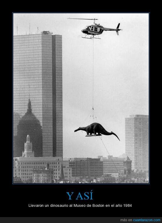 19484,arte,dinosaurio,escultura,helicoptero,llevar,Museo de Boston,transporte