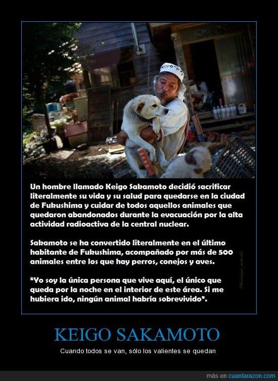 abandonados,animales,cuidar,Fukushima,Japón,Keigo Sakamoto,mascotas