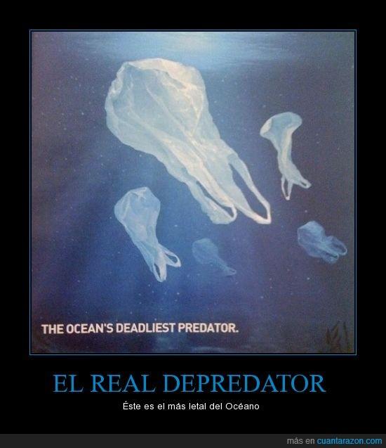 animal,bolsa,depredador,l plastico,letal,matar,medusa