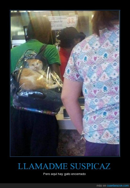 bolsa,encerrado,gato,meter,mochila,transparente