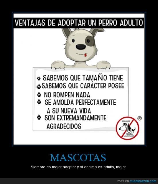 adoptar,grande,no solo cachorros,perro,refugio,salvar,tamaño