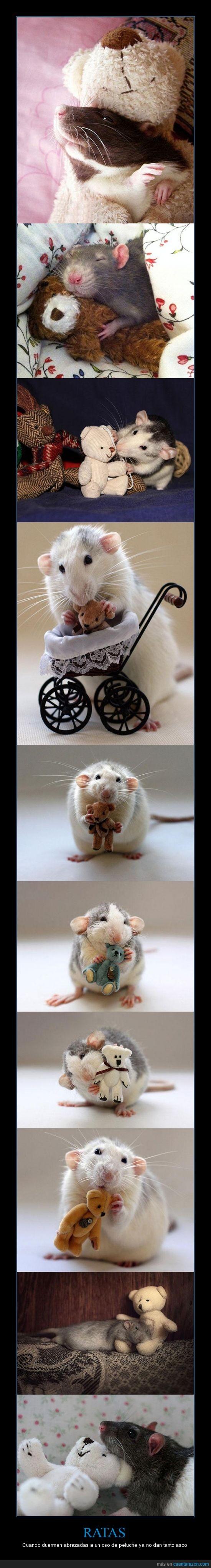 abrazar,animal,dar asco,oso peluche,que mona,ratas