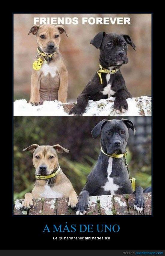 cerca,crecer,encima,igual,mismo,perro,valla