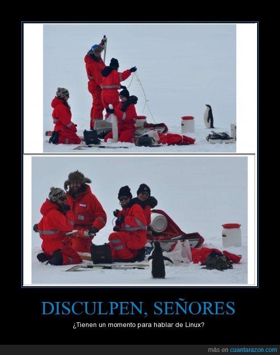antartida,linux,pingüino