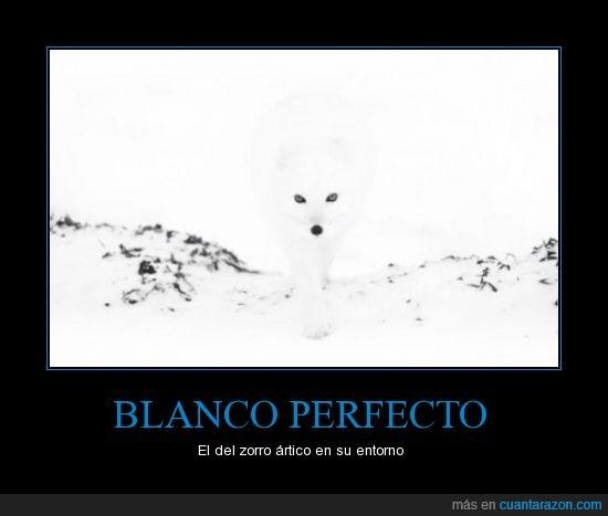 ártico,blanco,montaña,nieve,perfecto,precioso,zorro