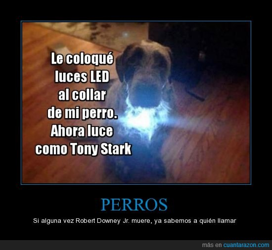 collar,iron man,ironman,led,pecho,perro,robert downey jr
