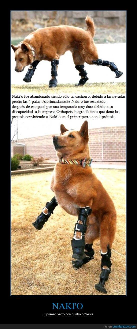 esperanza,Naki'o,Orthopets,patas,perro,prótesis