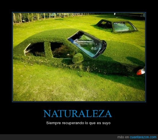 coche,crecer,encima,maleza,naturaleza,planta