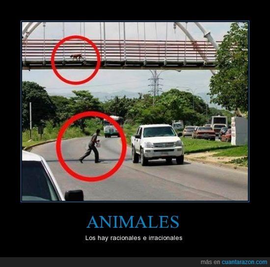 arriesgar,carretera,cruzar,pasar,perro,persona,puente,tonto
