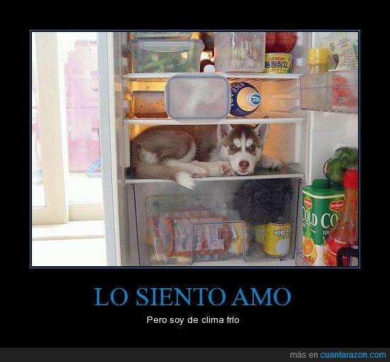 can,comida,del monte,husky,nevera,perro,refrigerador,siberiano