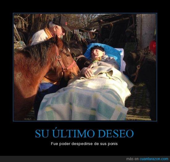 abuelo,anciano,caballo,despedir,enfermo,mayor,poni,pony,señor,último deseo