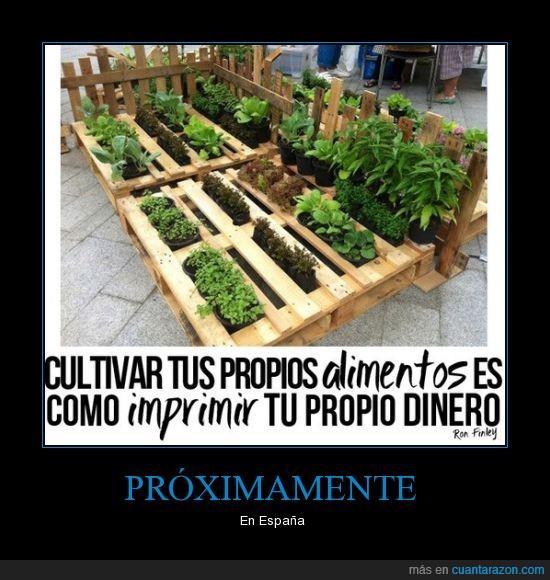 alimento,cultivar,dinero,imprimir,plantar,plantas,propia,propio