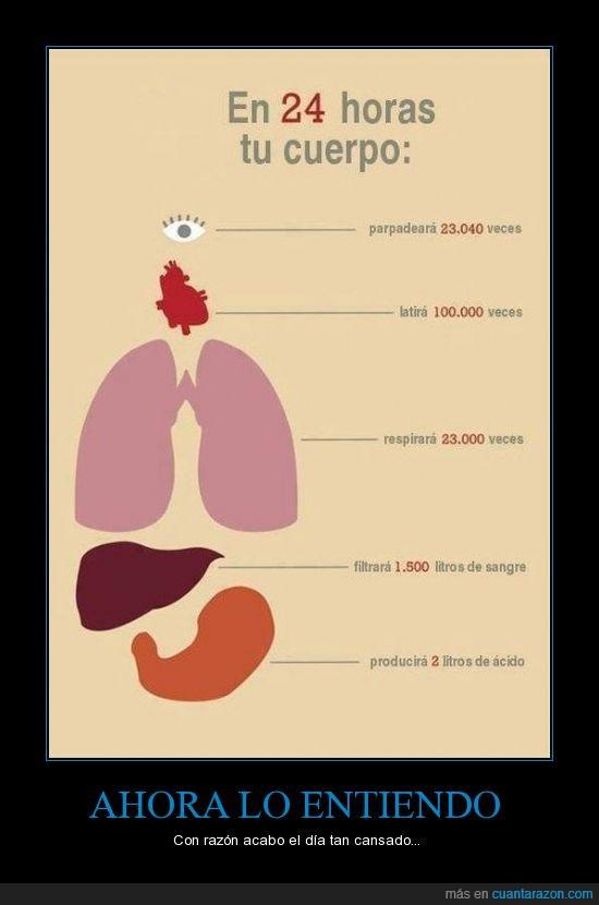 acido,cuerpo,estomago,higado,litro,ojos,pestañear,pulmones