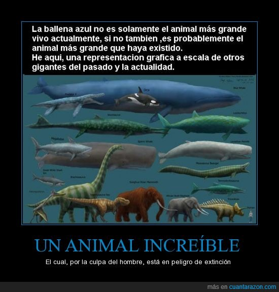 actualidad,animal,antes,ballena azul,dinosaurios,hombre,increible,peligro de extincion