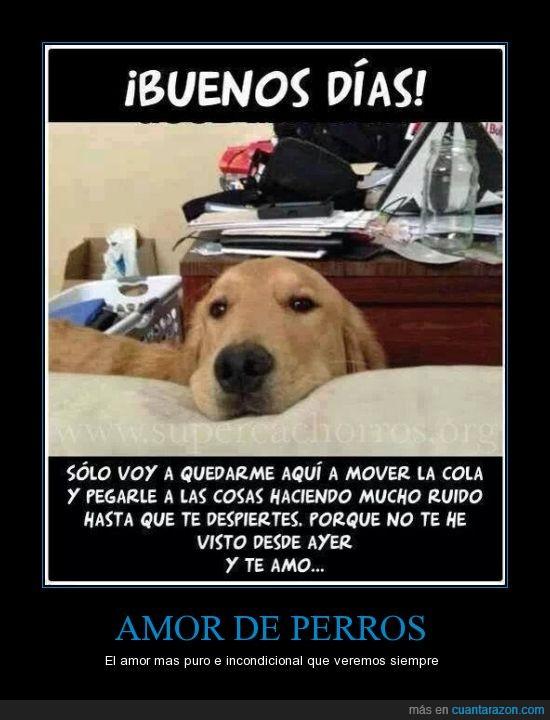 amar,amor,amor de perros,mascota,perros,querer