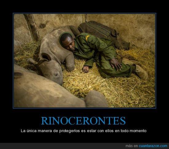 reserva,rinoceronte,vigilante