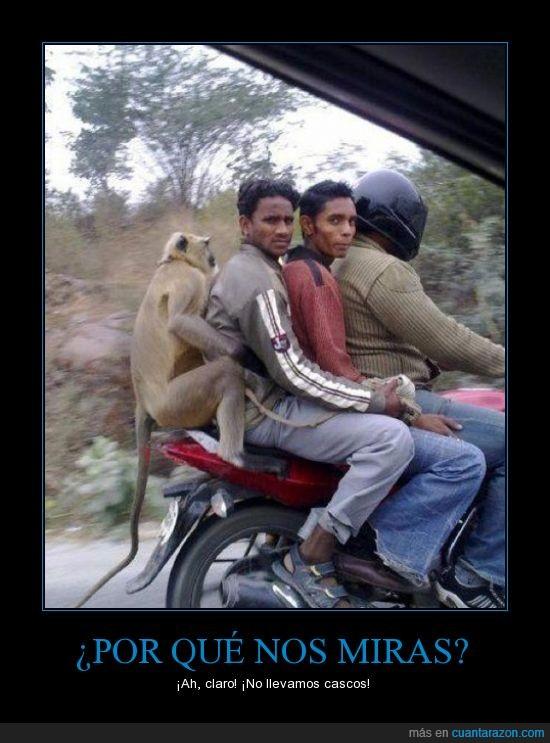 casco,cuatro,indio,mirar,mono,montado,moto