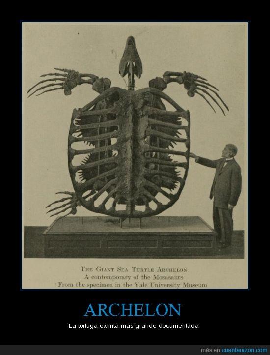archelon,dinosaurio,esqueleto,fosil,gigante,mosasaurio,prehistoria,tortuga,yale