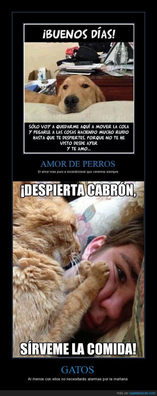 amor de gato,comer,comida,comprar,gato,gatos,mascota,perro,querer
