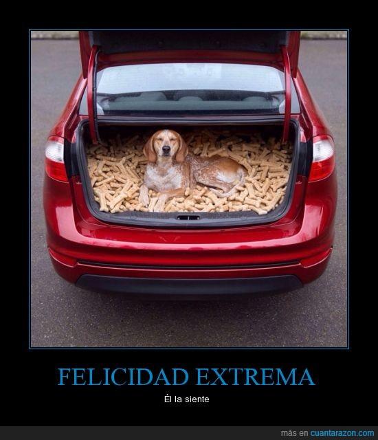 auto,baúl,can,comida,feliz,galletas,hueso,maletero,perro,sonrisa