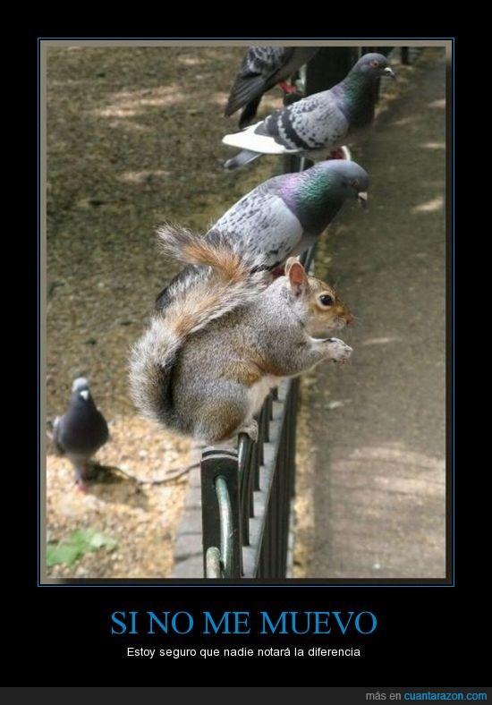 Ardilla,diferencia,moverse,palomas